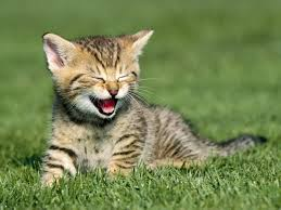 cat laughing 2