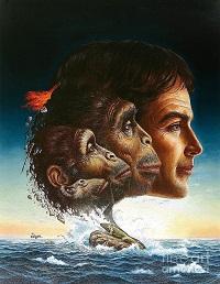 Wild Human Theory